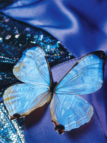 تصاویر جدید زیباسازی وبلاگ , سایت پیچك » بخش تصاویر زیباسازی » سری دوم www.pichak.net كلیك كنید